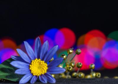 7. Rigmor Stenseth - Årets siste blomst (16 poeng)