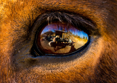 2. Signe Gry Isaksen - Retina, sett fra en hests perspektiv (33 poeng)
