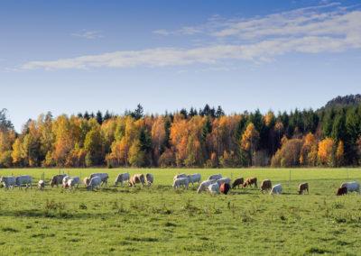 11. Rigmor Stenseth - En høstdag (5 poeng)