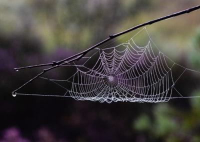 3. Edle Erøy - Duggfriskt spindelsvev (19 poeng)