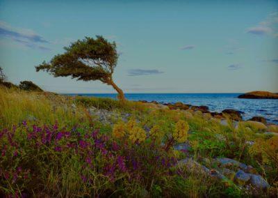 5. Per Tronstad - Formet av vær og vind (18 poeng)