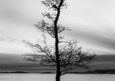 Tor Undhjem - Sommereik i vinterlys