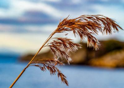 Rigmor Stenseth - Strå i vintersol
