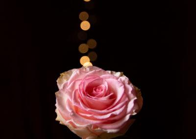 Tore Gravelsæter - Rose