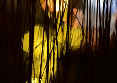 Vidar Hoel - Strå fanget i lyset