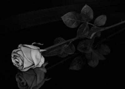 Arvid Løite - Rose