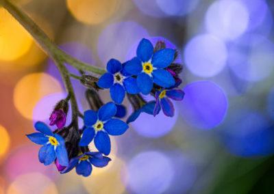 7. Mariusz Redlich - Flowers party (14 poeng)